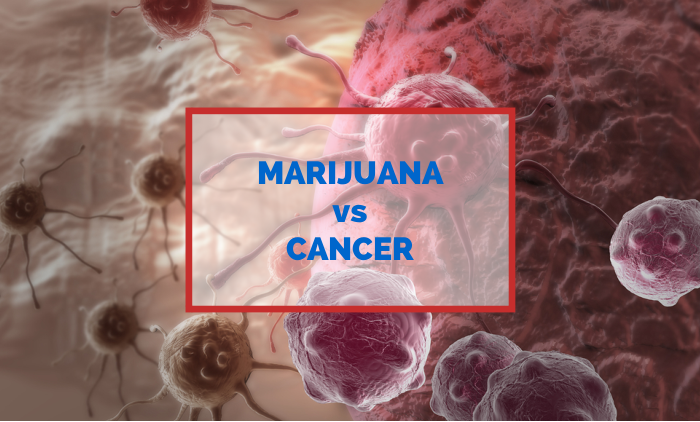 Marijuana can kill cancer cells